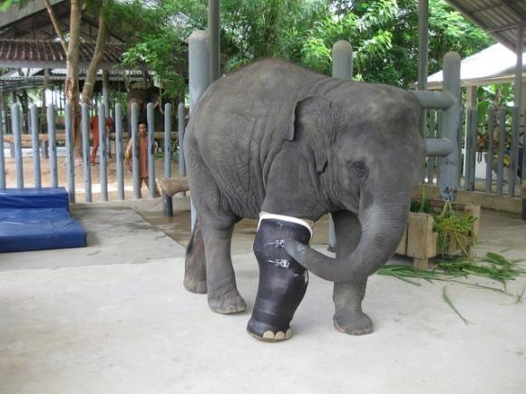 Mosha Elephant Parade