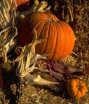 pumpkins-405×479